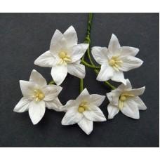 WOC - 40pc Lilies